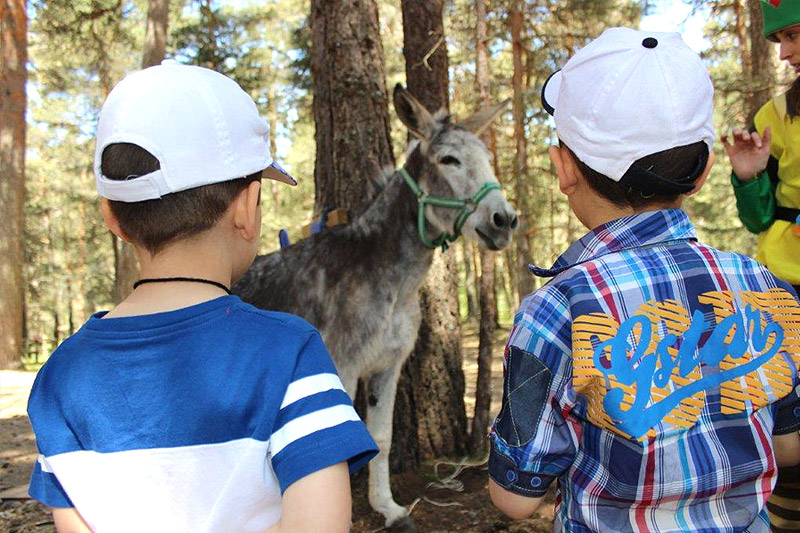 aula-burro